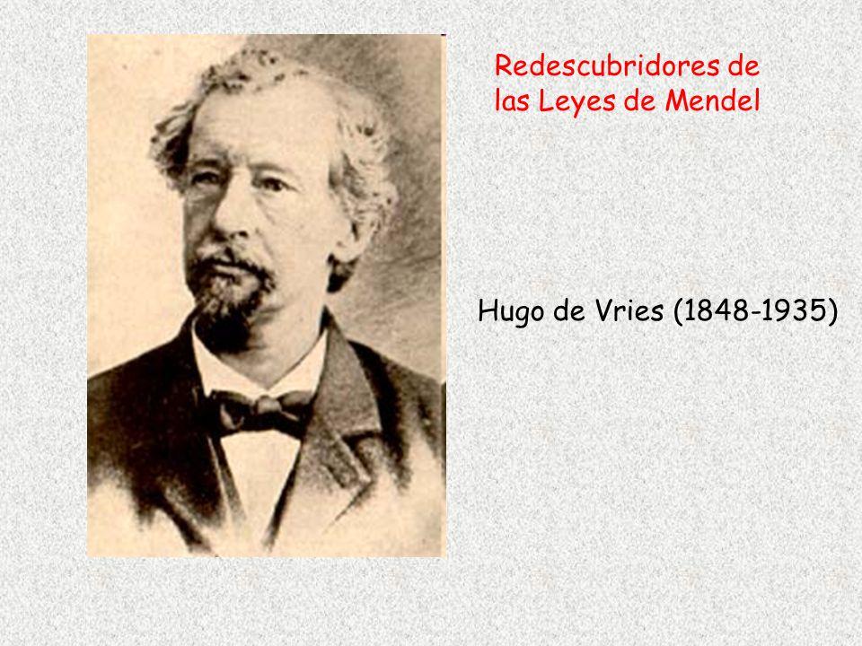 Hugo de Vries (1848-1935) Redescubridores de las Leyes de Mendel