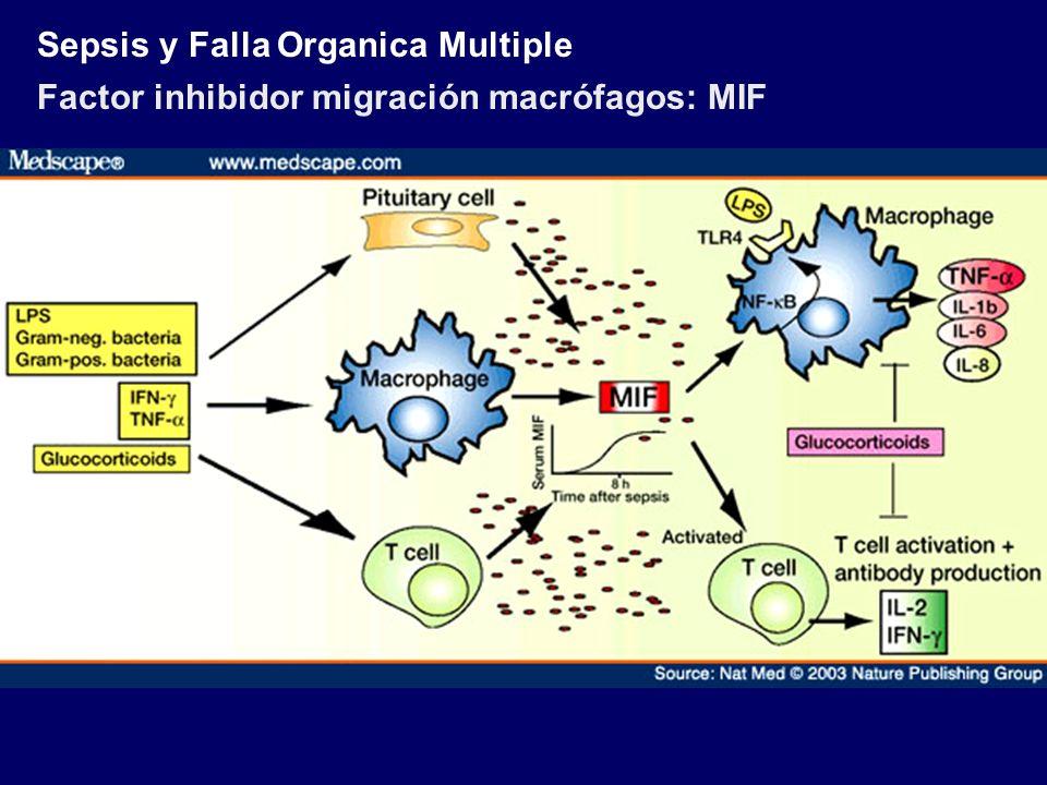Sepsis y Falla Organica Multiple Factor inhibidor migración macrófagos: MIF