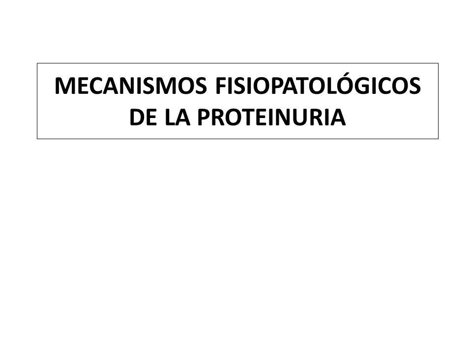 En todas las enfermedades glomerulares con proteinuria no selectiva, la distinta cantidad de proteínas de alto peso que llegan a la luz tubular es una expresión de la variable severidad del daño en la selectividad del tamaño, además de la que afecta a la carga.