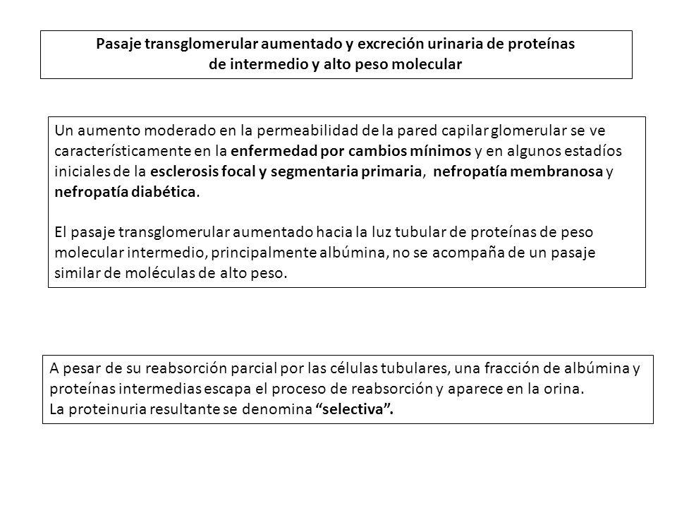 Pasaje transglomerular aumentado y excreción urinaria de proteínas de intermedio y alto peso molecular Un aumento moderado en la permeabilidad de la p