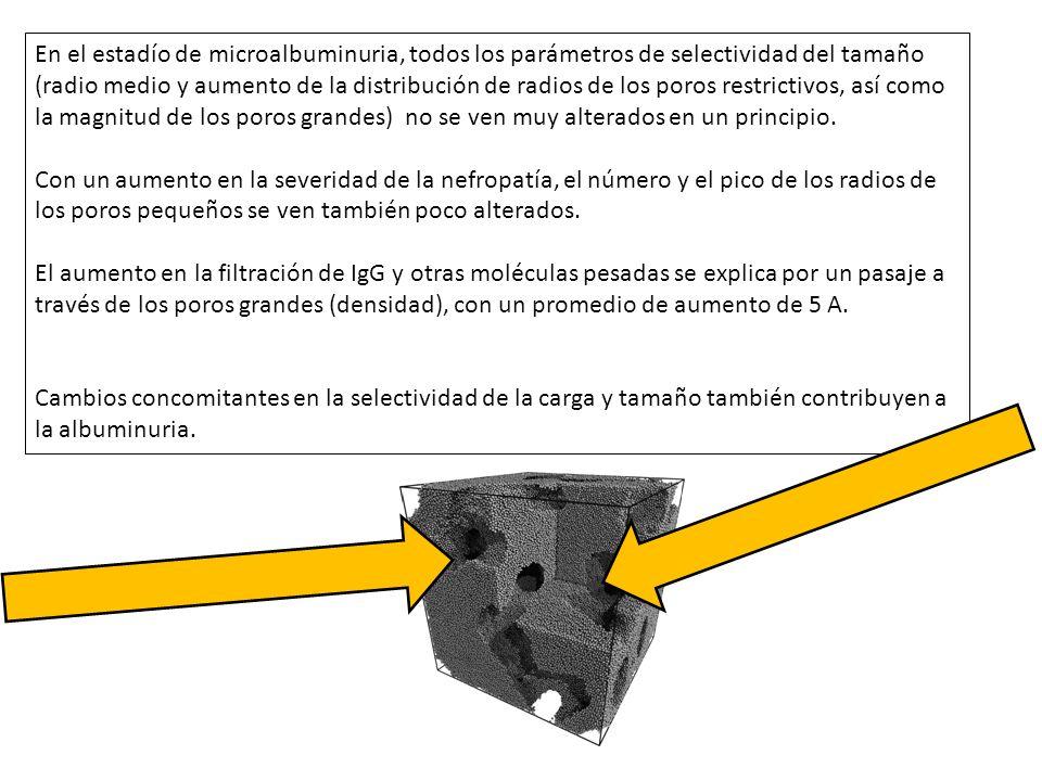 En el estadío de microalbuminuria, todos los parámetros de selectividad del tamaño (radio medio y aumento de la distribución de radios de los poros re