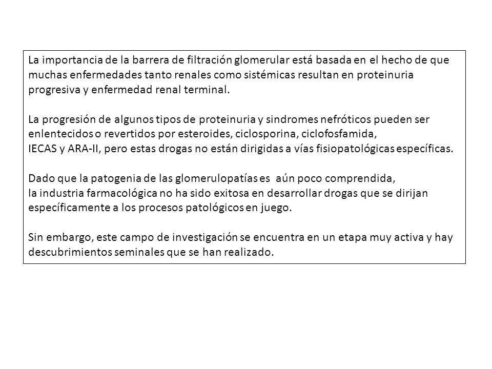 LA CANTIDAD Y EL PESO Y RADIO DE LAS PROTEÍNAS QUE LLEGAN A LA LUZ TUBULAR AUMENTAN PROGRESIVAMENTE A MEDIDA QUE LA INJURIA SE CRONIFICA, Y DENOTAN LA DISRUPCIÓN ESTRUCTURAL DEL GLOMÉRULO, ALTERANDO LA SELECTIVIDAD DE LAS PROTEÍNAS FILTRADAS.