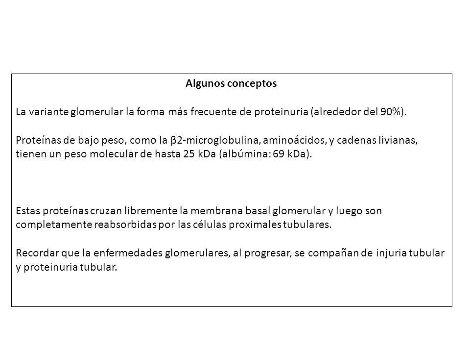 Algunos conceptos La variante glomerular la forma más frecuente de proteinuria (alrededor del 90%). Proteínas de bajo peso, como la β2-microglobulina,