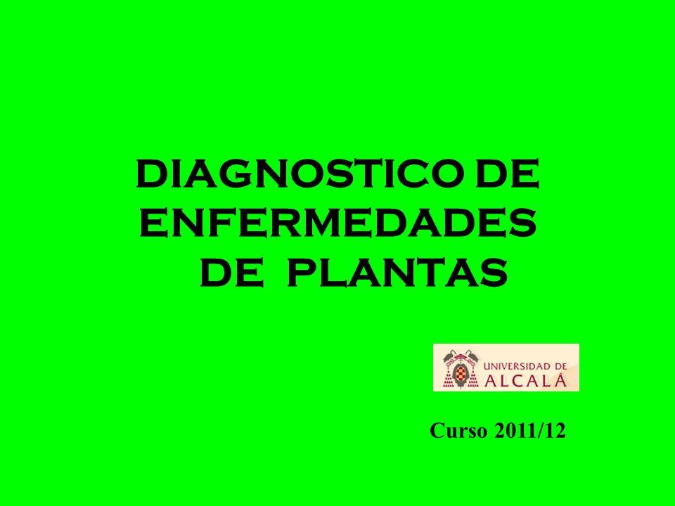 DIAGNÓSTICO - acto de reconocer una enfermedad.