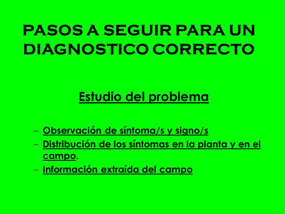 Estudio del problema – Observación de síntoma/s y signo/s – Distribución de los síntomas en la planta y en el campo.
