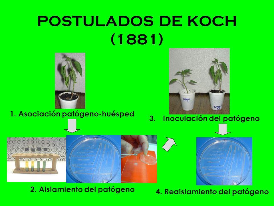 POSTULADOS DE KOCH (1881) 1.Asociación patógeno-huésped 2.