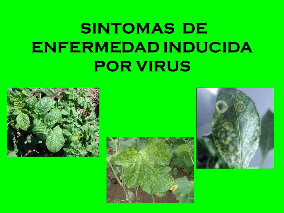 SINTOMAS DE ENFERMEDAD INDUCIDA POR VIRUS