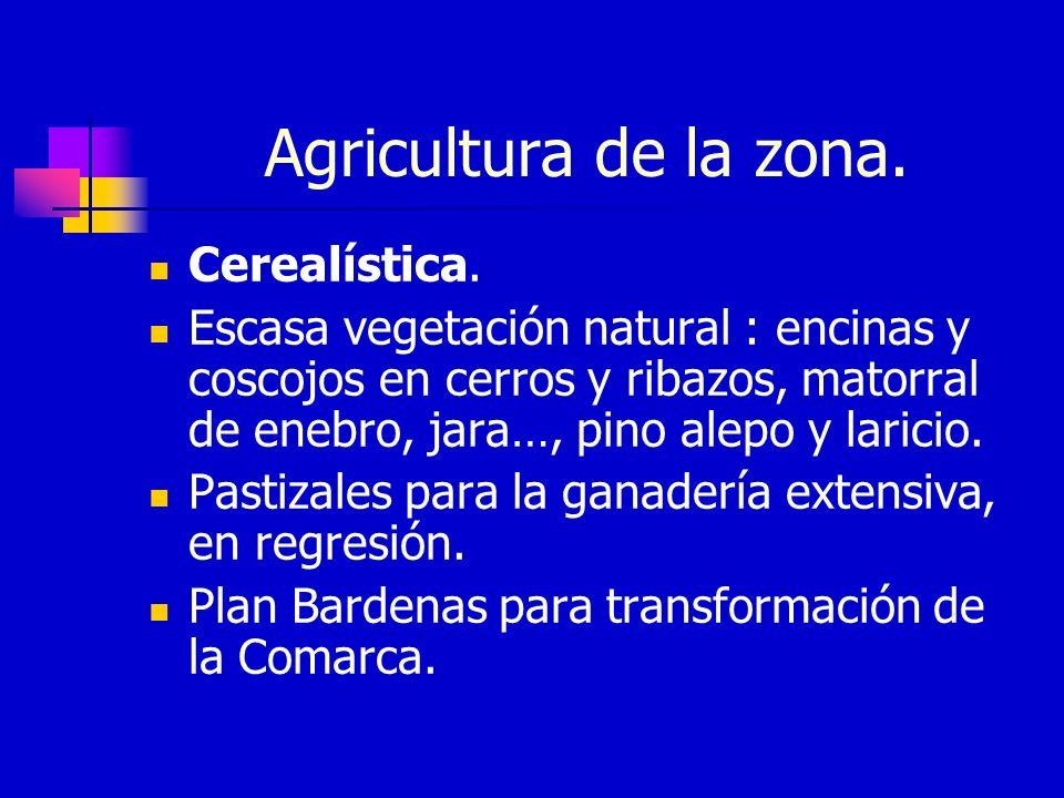 Agricultura de la zona.Cerealística.
