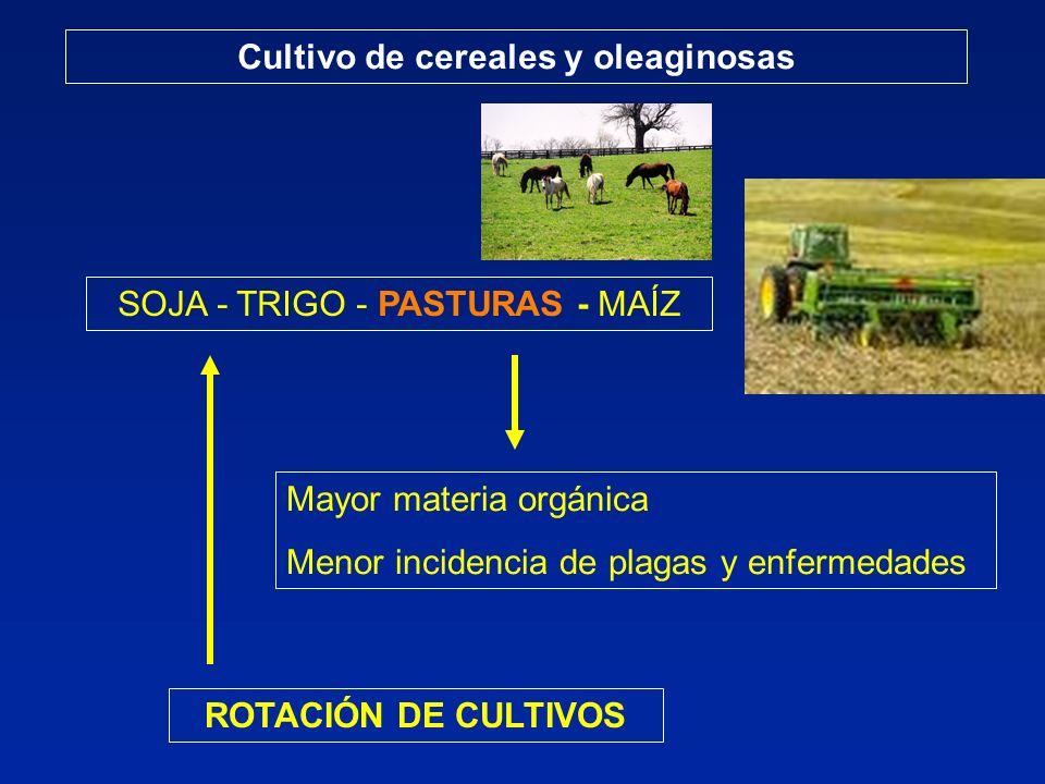 Cultivo de cereales y oleaginosas ROTACIÓN DE CULTIVOS SOJA - TRIGO - PASTURAS - MAÍZ Mayor materia orgánica Menor incidencia de plagas y enfermedades