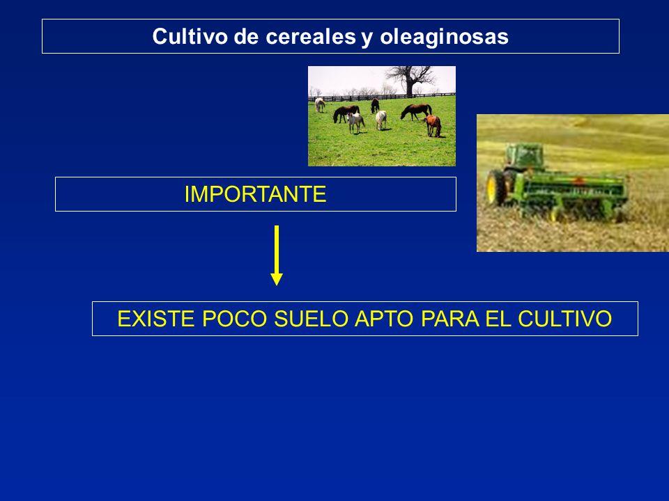 Cultivo de cereales y oleaginosas IMPORTANTE EXISTE POCO SUELO APTO PARA EL CULTIVO