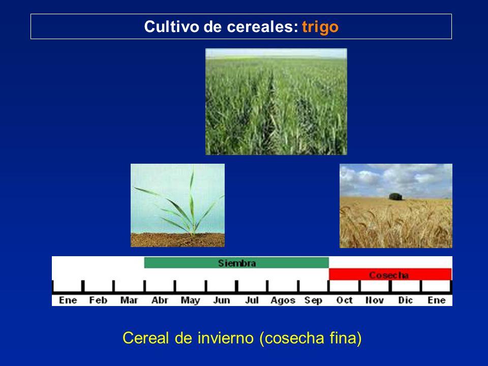 Cereal de invierno (cosecha fina)