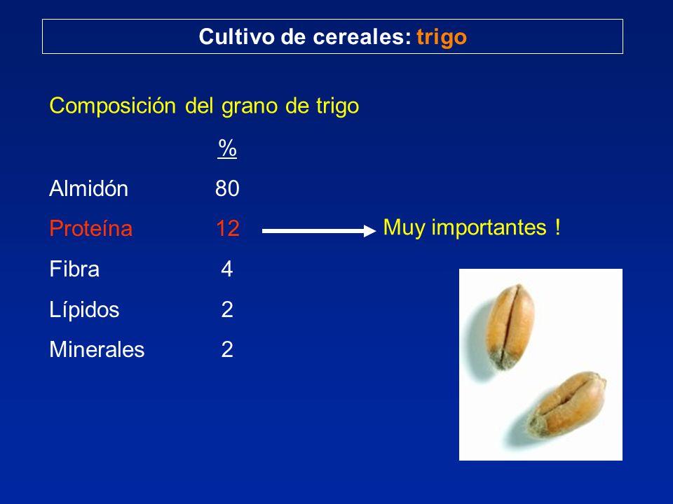 Cultivo de cereales: trigo Composición del grano de trigo Almidón Proteína Fibra Lípidos Minerales % 80 12 4 2 Muy importantes !
