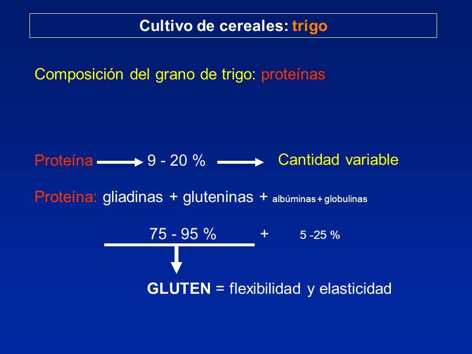 Cultivo de cereales: trigo Composición del grano de trigo: proteínas Proteína9 - 20 % Cantidad variable Proteína: gliadinas + gluteninas + albúminas +