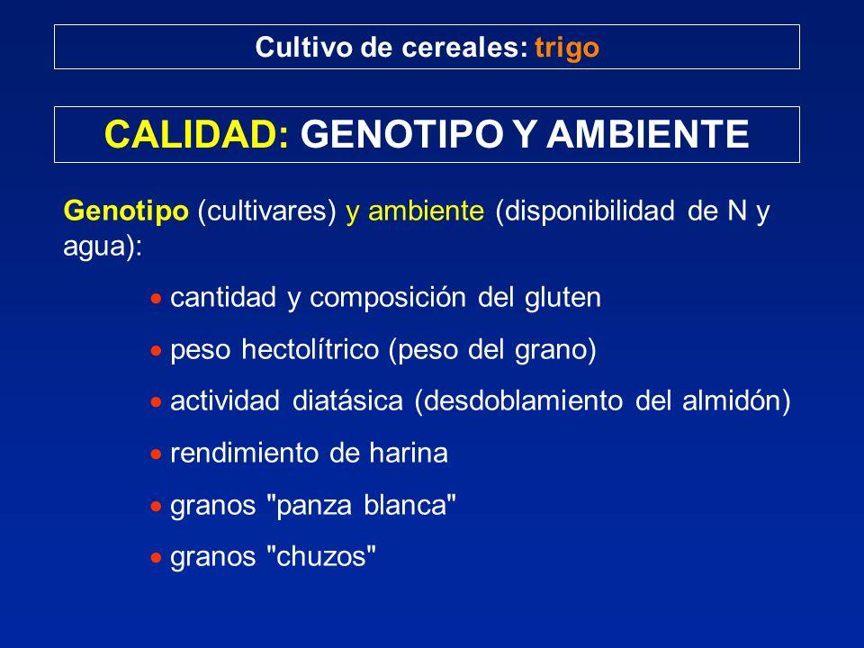 CALIDAD: GENOTIPO Y AMBIENTE Cultivo de cereales: trigo Genotipo (cultivares) y ambiente (disponibilidad de N y agua): cantidad y composición del glut