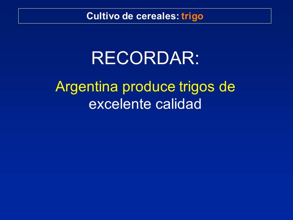 Cultivo de cereales: trigo RECORDAR: Argentina produce trigos de excelente calidad
