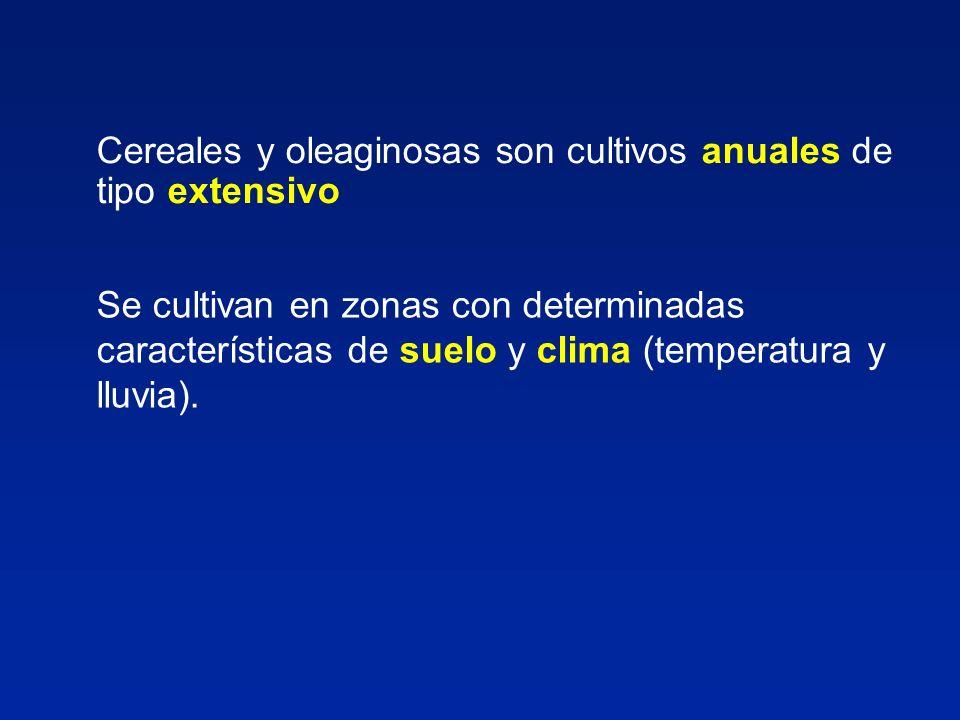 Cereales y oleaginosas son cultivos anuales de tipo extensivo Se cultivan en zonas con determinadas características de suelo y clima (temperatura y ll