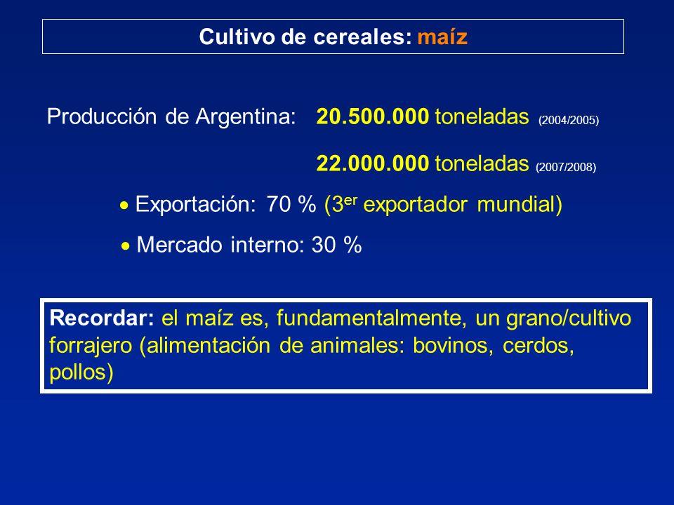 Cultivo de cereales: maíz Producción de Argentina: 20.500.000 toneladas (2004/2005) 22.000.000 toneladas (2007/2008) Exportación: 70 % (3 er exportador mundial) Mercado interno: 30 % Recordar: el maíz es, fundamentalmente, un grano/cultivo forrajero (alimentación de animales: bovinos, cerdos, pollos)
