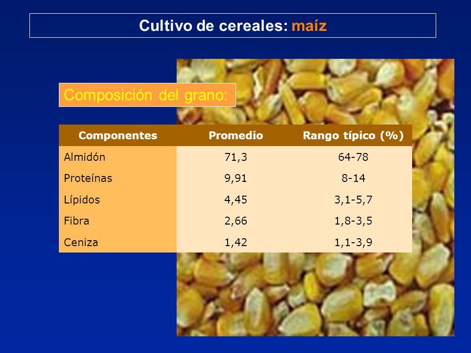 ComponentesPromedioRango típico (%) Almidón71,364-78 Proteínas9,918-14 Lípidos4,453,1-5,7 Fibra2,661,8-3,5 Ceniza1,421,1-3,9 Composición del grano: Cultivo de cereales: maíz