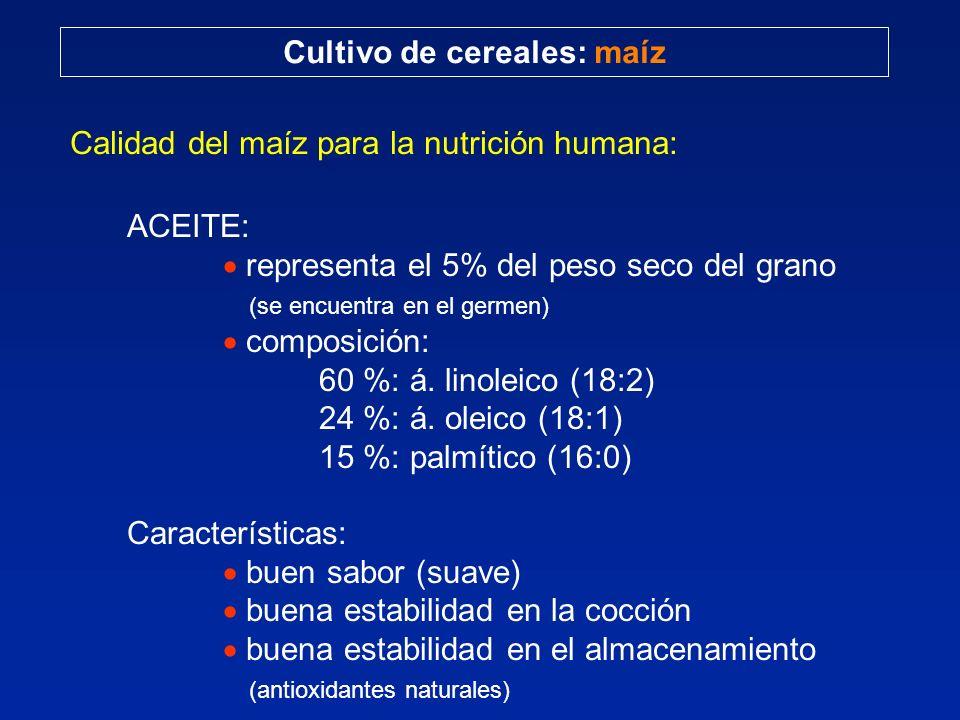 Cultivo de cereales: maíz Calidad del maíz para la nutrición humana: ACEITE: representa el 5% del peso seco del grano (se encuentra en el germen) comp