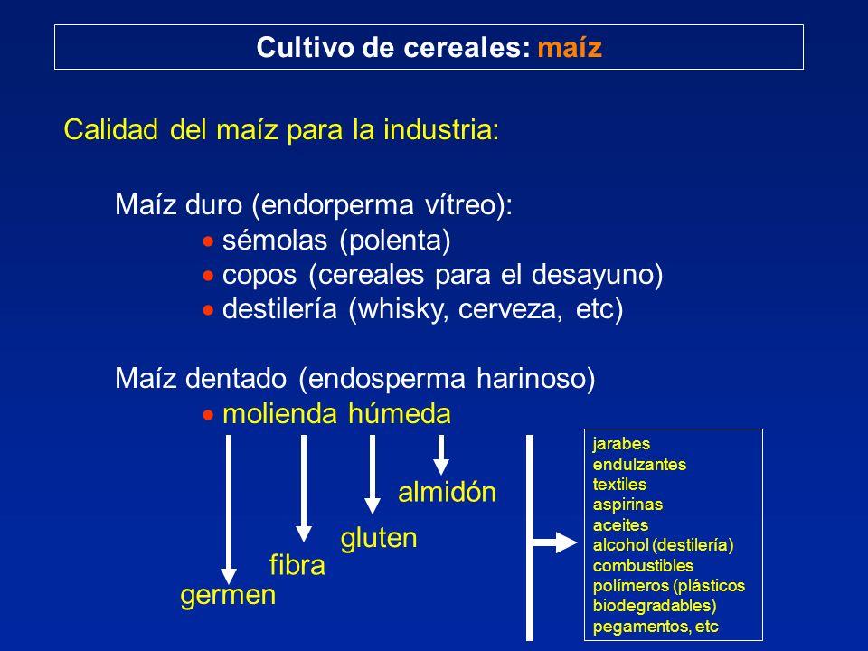 Cultivo de cereales: maíz Calidad del maíz para la industria: Maíz duro (endorperma vítreo): sémolas (polenta) copos (cereales para el desayuno) desti