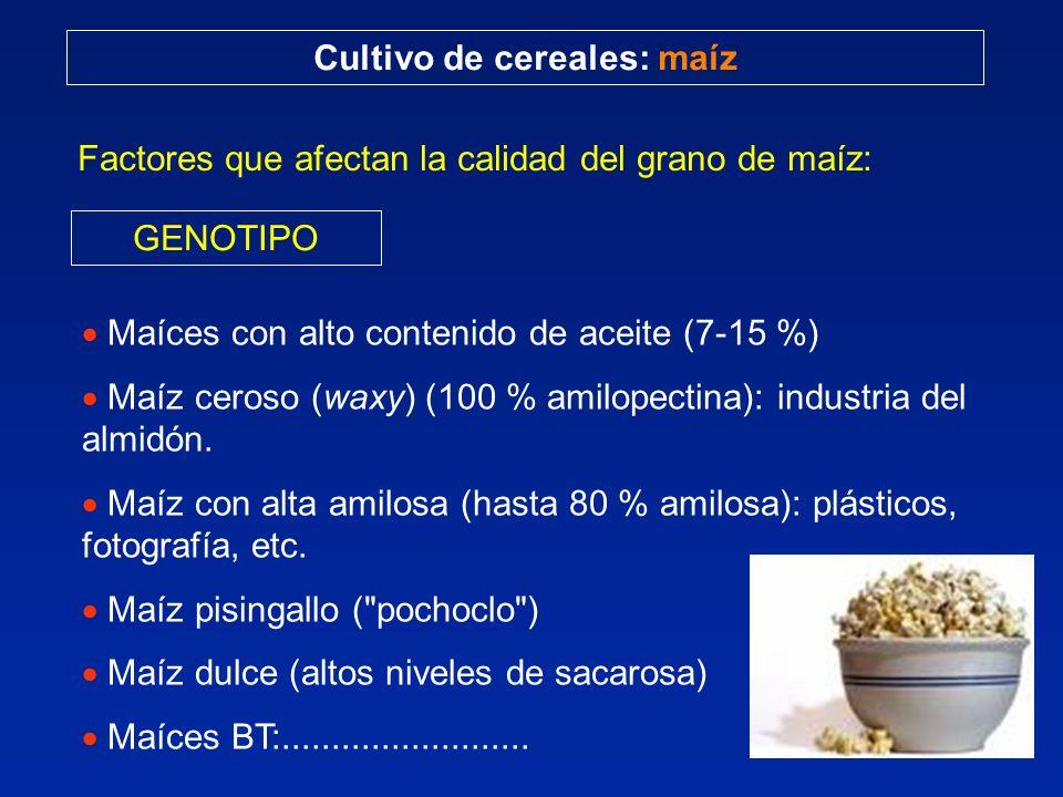 Cultivo de cereales: maíz Factores que afectan la calidad del grano de maíz: GENOTIPO Maíces con alto contenido de aceite (7-15 %) Maíz ceroso (waxy)