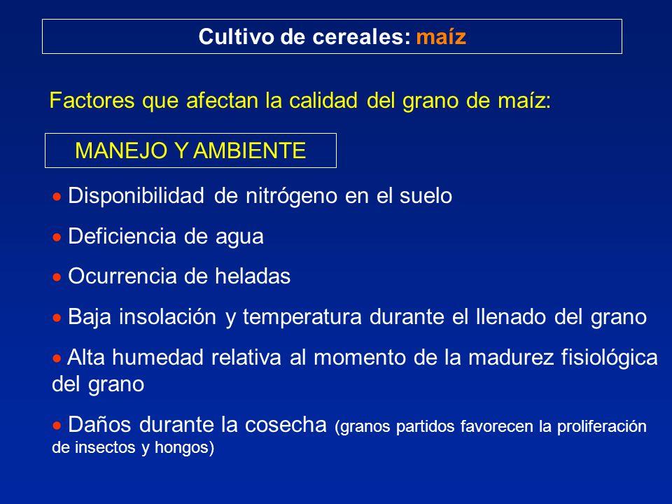 Cultivo de cereales: maíz Factores que afectan la calidad del grano de maíz: MANEJO Y AMBIENTE Disponibilidad de nitrógeno en el suelo Deficiencia de