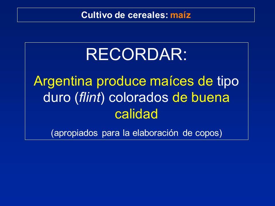 Cultivo de cereales: maíz RECORDAR: Argentina produce maíces de tipo duro (flint) colorados de buena calidad (apropiados para la elaboración de copos)