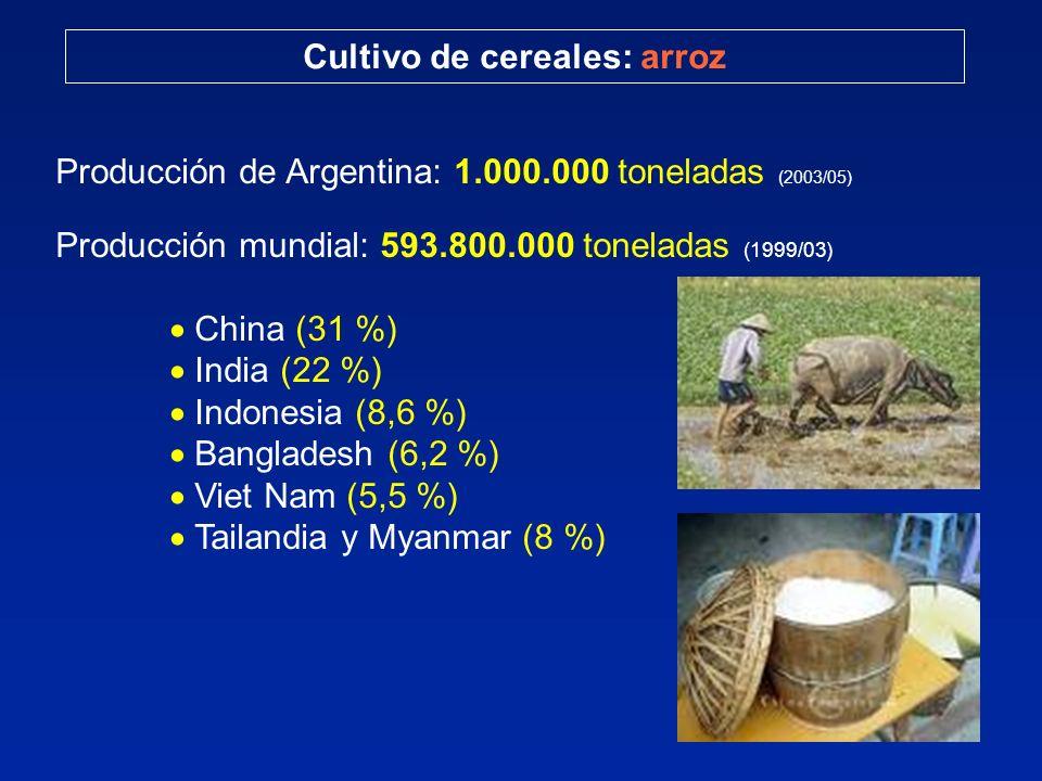 Cultivo de cereales: arroz Producción de Argentina: 1.000.000 toneladas (2003/05) Producción mundial: 593.800.000 toneladas (1999/03) China (31 %) India (22 %) Indonesia (8,6 %) Bangladesh (6,2 %) Viet Nam (5,5 %) Tailandia y Myanmar (8 %)