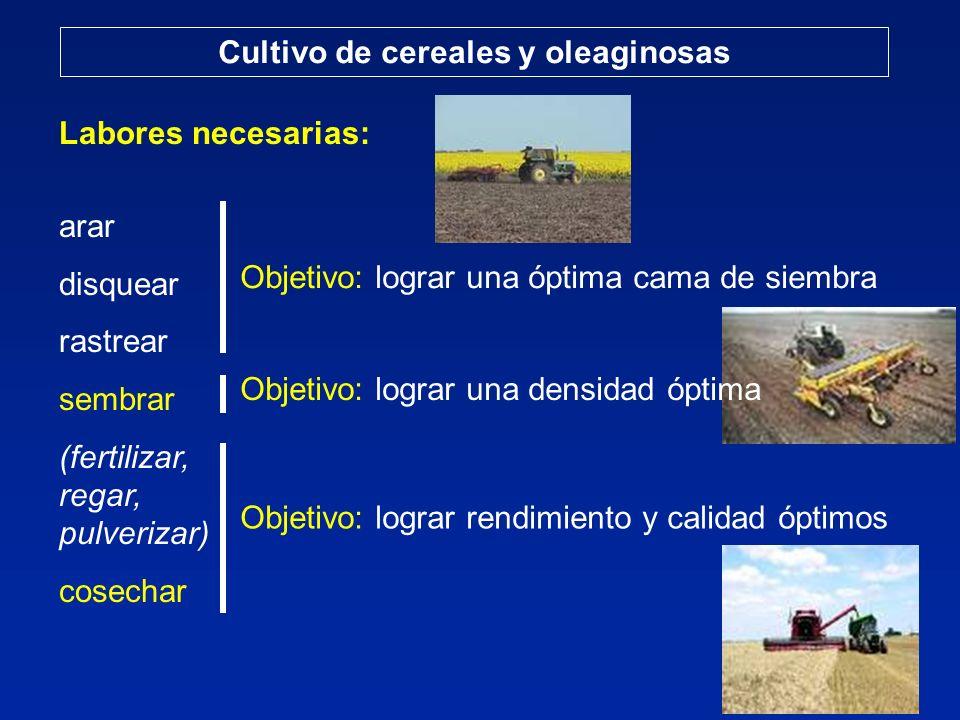 Cultivo de cereales: trigo Composición del grano de trigo: proteínas Proteína9 - 20 % Cantidad variable Proteína: gliadinas + gluteninas + albúminas + globulinas 75 - 95 % + 5 -25 % GLUTEN = flexibilidad y elasticidad