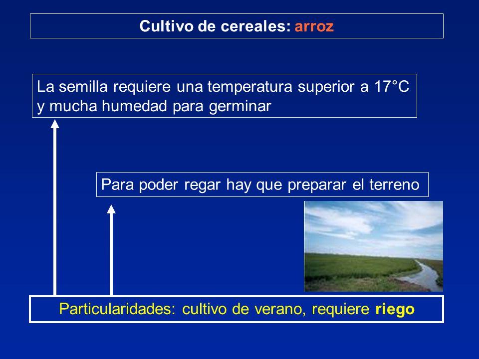 Cultivo de cereales: arroz Particularidades: cultivo de verano, requiere riego La semilla requiere una temperatura superior a 17°C y mucha humedad par