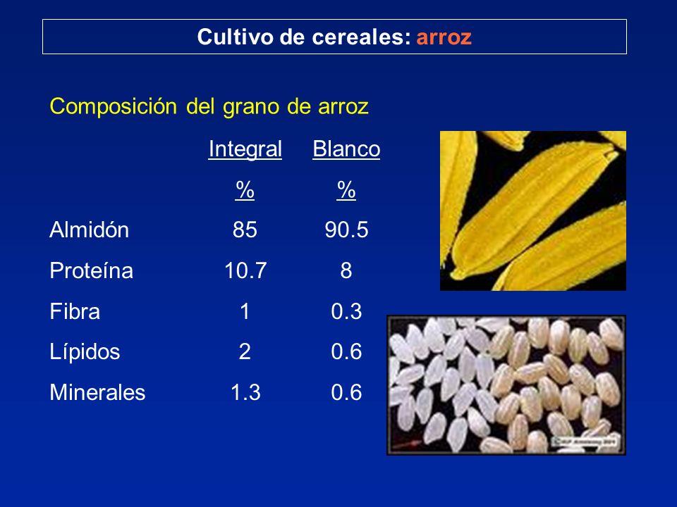 Composición del grano de arroz Almidón Proteína Fibra Lípidos Minerales Integral % 85 10.7 1 2 1.3 Cultivo de cereales: arroz Blanco % 90.5 8 0.3 0.6