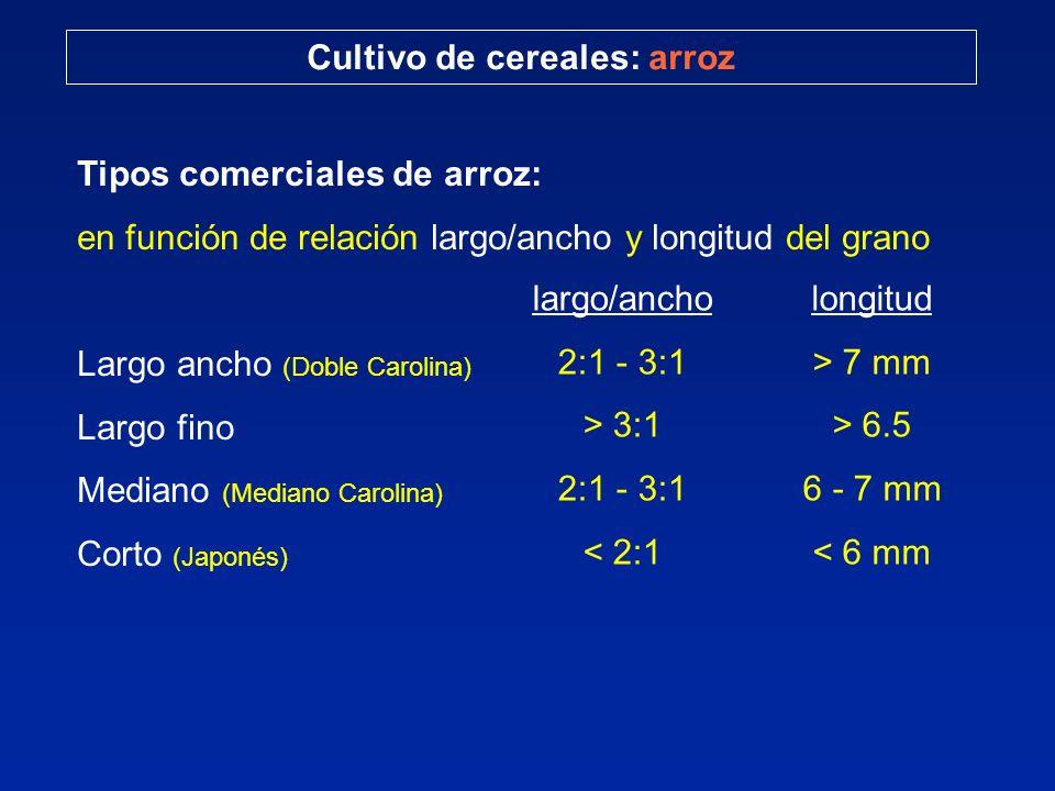 Cultivo de cereales: arroz Tipos comerciales de arroz: en función de relación largo/ancho y longitud del grano Largo ancho (Doble Carolina) Largo fino