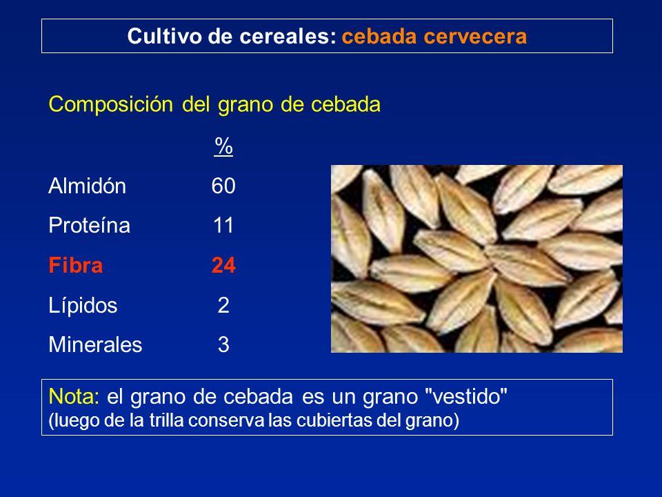 Cultivo de cereales: cebada cervecera Composición del grano de cebada Almidón Proteína Fibra Lípidos Minerales % 60 11 24 2 3 Nota: el grano de cebada es un grano vestido (luego de la trilla conserva las cubiertas del grano)