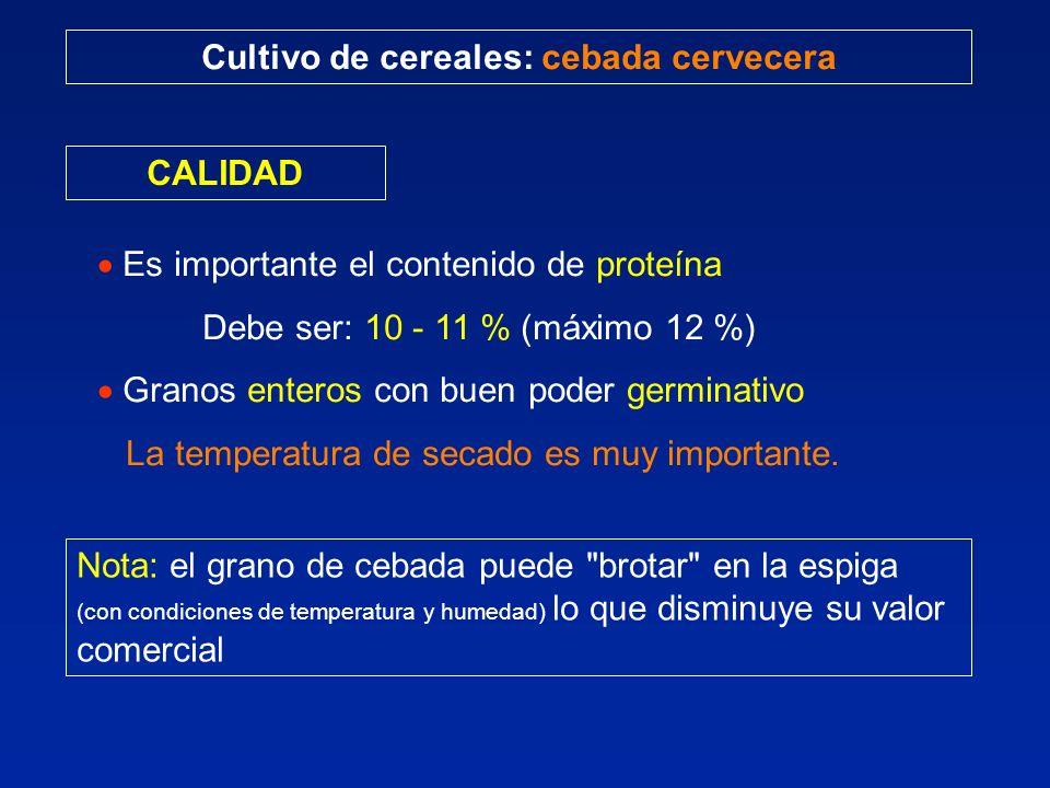 Cultivo de cereales: cebada cervecera CALIDAD Es importante el contenido de proteína Debe ser: 10 - 11 % (máximo 12 %) Granos enteros con buen poder germinativo La temperatura de secado es muy importante.