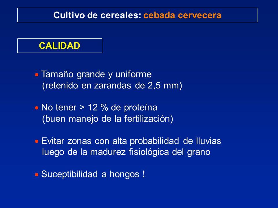 Cultivo de cereales: cebada cervecera CALIDAD Tamaño grande y uniforme (retenido en zarandas de 2,5 mm) No tener > 12 % de proteína (buen manejo de la