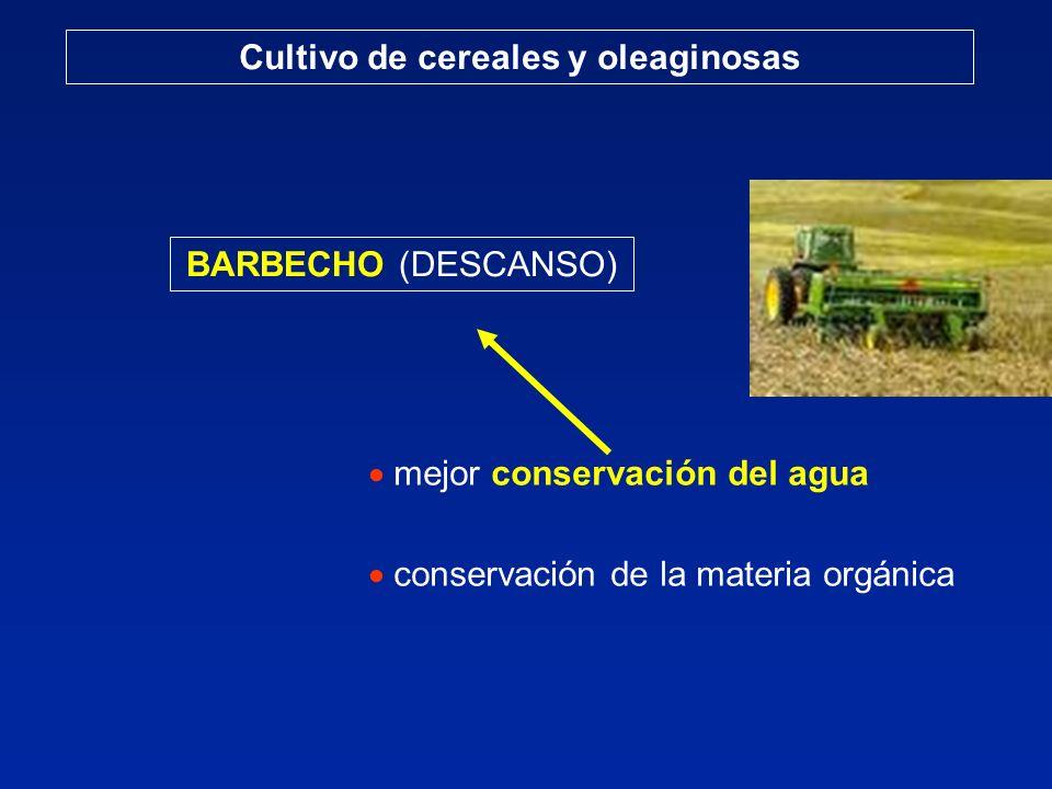 Cultivo de cereales: cebada cervecera RECORDAR La cebada cervecera es un cultivo con posibilidades de expansión.