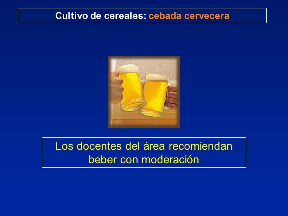 Cultivo de cereales: cebada cervecera Los docentes del área recomiendan beber con moderación