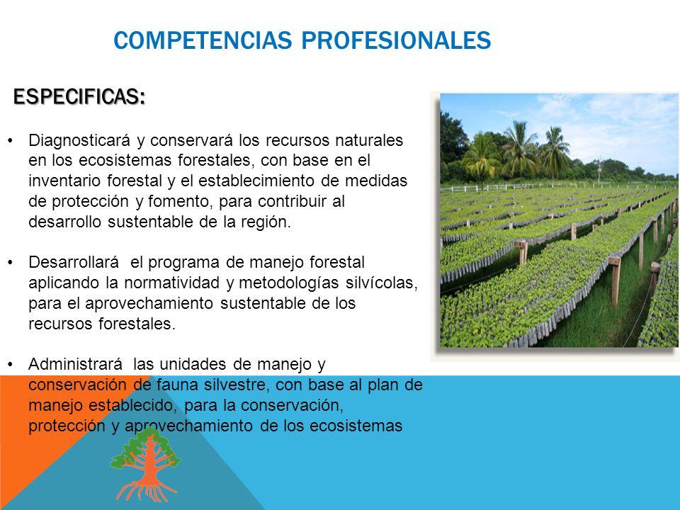 COMPETENCIAS PROFESIONALES ESPECIFICAS: ESPECIFICAS: Diagnosticará y conservará los recursos naturales en los ecosistemas forestales, con base en el inventario forestal y el establecimiento de medidas de protección y fomento, para contribuir al desarrollo sustentable de la región.