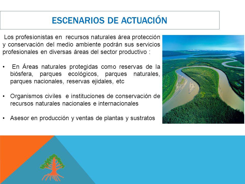 Los profesionistas en recursos naturales área protección y conservación del medio ambiente podrán sus servicios profesionales en diversas áreas del se