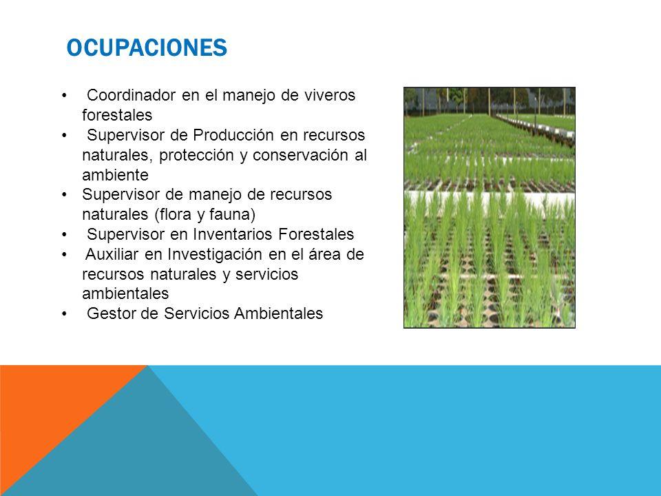 OCUPACIONES Coordinador en el manejo de viveros forestales Supervisor de Producción en recursos naturales, protección y conservación al ambiente Super