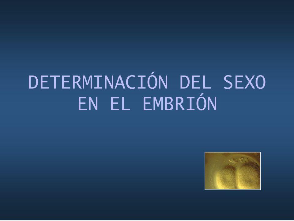 DETERMINACIÓN DEL SEXO EN EL EMBRIÓN