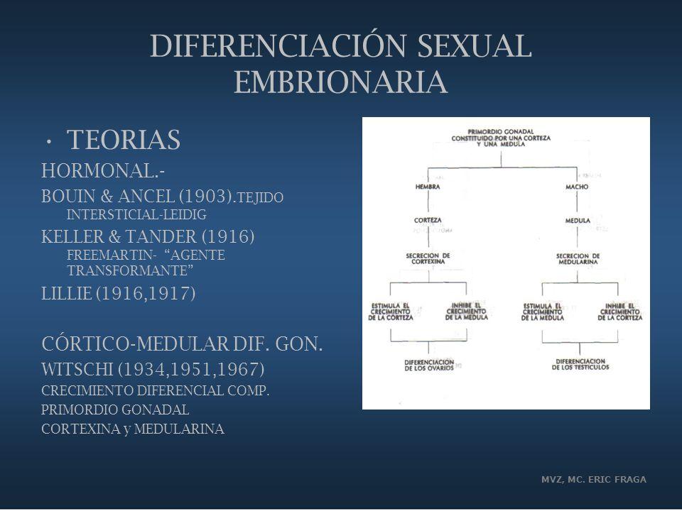 MVZ, MC. ERIC FRAGA DIFERENCIACIÓN SEXUAL EMBRIONARIA TEORIAS HORMONAL.- BOUIN & ANCEL (1903). TEJIDO INTERSTICIAL-LEIDIG KELLER & TANDER (1916) FREEM