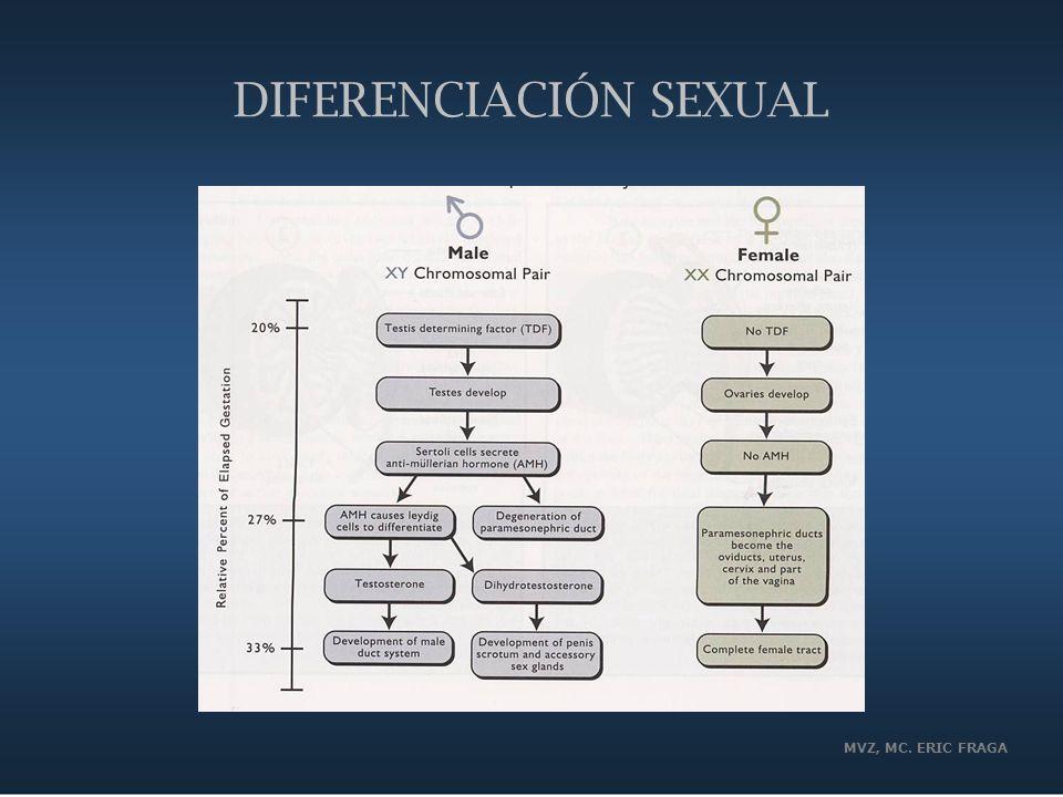 MVZ, MC. ERIC FRAGA DIFERENCIACIÓN SEXUAL