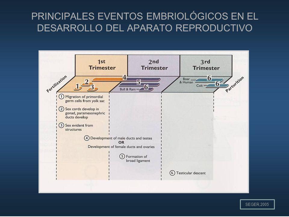 PRINCIPALES EVENTOS EMBRIOLÓGICOS EN EL DESARROLLO DEL APARATO REPRODUCTIVO SEGER,2005