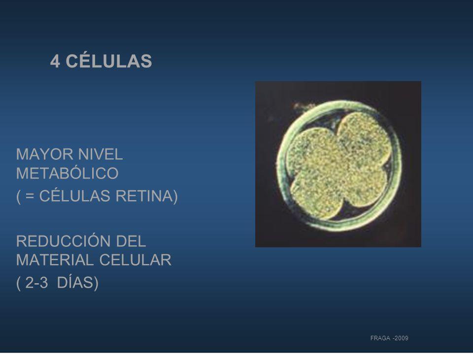 4 CÉLULAS MAYOR NIVEL METABÓLICO ( = CÉLULAS RETINA) REDUCCIÓN DEL MATERIAL CELULAR ( 2-3 DÍAS) FRAGA -2009
