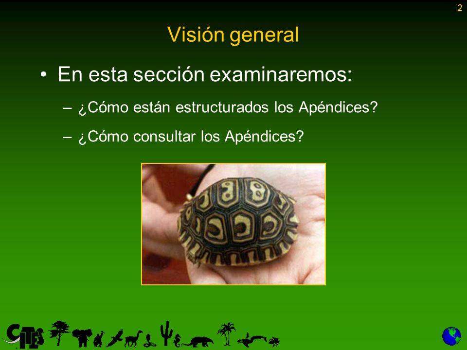 2 Visión general En esta sección examinaremos: –¿Cómo están estructurados los Apéndices? –¿Cómo consultar los Apéndices? 2