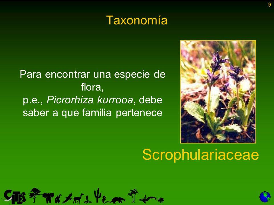 10 Taxonomía El reino vegetal o animal puede subdividirse en grupos progresivamente más pequeños Clase Orden Familia Género Especie (spp.) Subespecie (ssp.) Filo 10