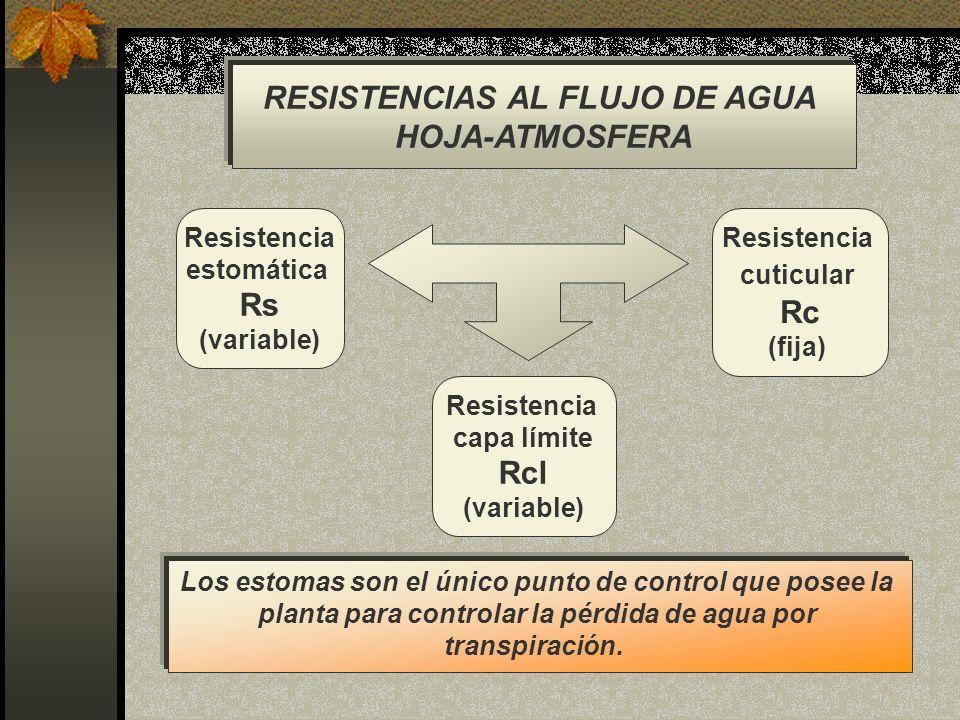 RESISTENCIAS AL FLUJO DE AGUA HOJA-ATMOSFERA Resistencia estomática Rs (variable) Resistencia capa límite Rcl (variable) Resistencia cuticular Rc (fij