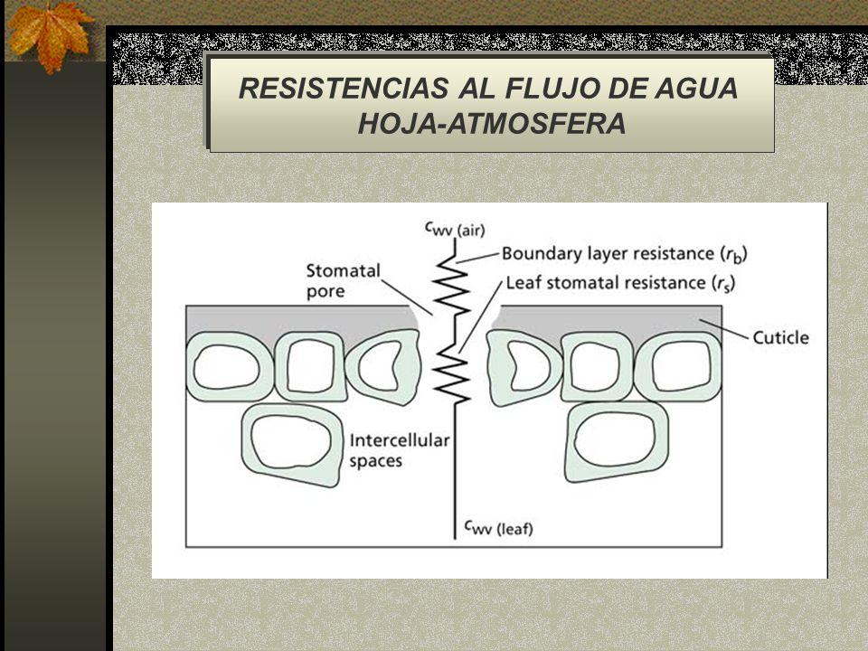 RESISTENCIAS AL FLUJO DE AGUA HOJA-ATMOSFERA