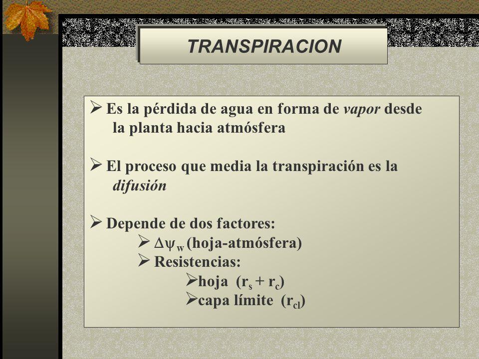 TRANSPIRACION Es la pérdida de agua en forma de vapor desde la planta hacia atmósfera El proceso que media la transpiración es la difusión Depende de